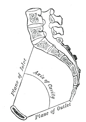 Figure Pelvis Axes Of The Pelvis