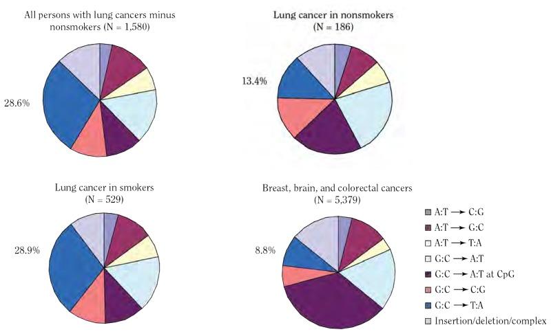 detoxifiere definitie papilloma nella vescica nell uomo