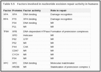 Table 5.5. Factors involved in nucleotide excision repair activity in humans.