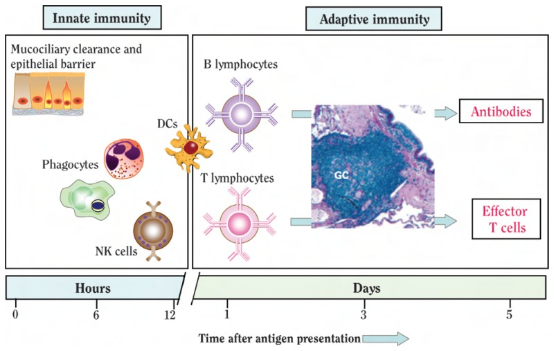5 Barriers Immune System Diagram Parts Of The Immune System Wire