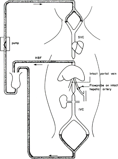 FIGURE 4.2. Hepatic venous long-circuit preparation with hepatic arterial flow (HAF) recording.
