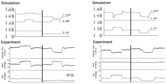 Figure 6.27. Model simulations and confirmatory evidence of choroidal myogenic local control.