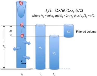 Figure 1.4. The volume filtered from an occluded vessel segment is indicated by the distance a marker cell travels (Δx) in a given amount of time (Δt).