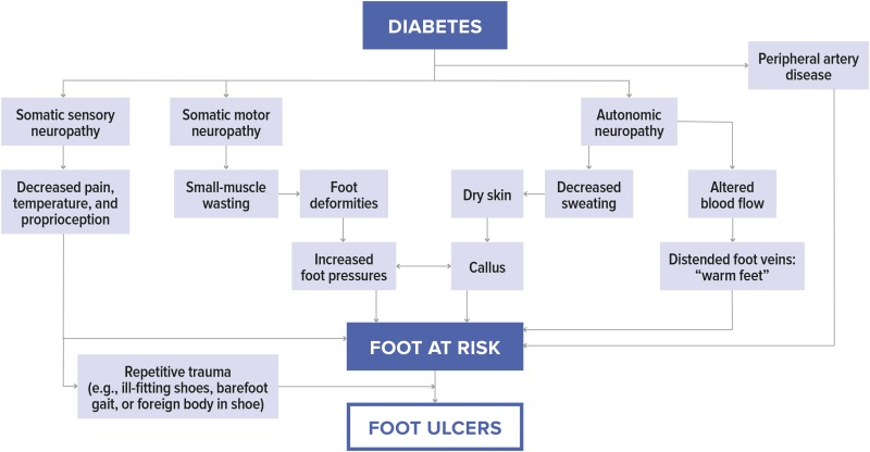 Figure 1 Pathways To Diabetic Foot Ulceration Diagnosis And Management Of Diabetic Foot Complications Ncbi Bookshelf