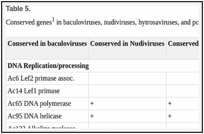 Introduction to the baculoviruses, their taxonomy, and