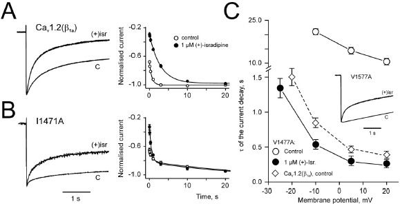 Figure 8. Onset of DHP-induced inactivation is voltage-dependent and recovery is modulated by inactivation determinants.