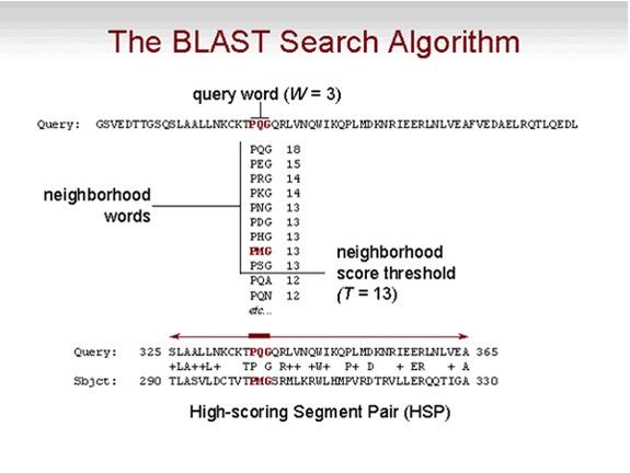 blast glossary blast help ncbi bookshelf