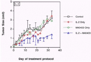 Figure 13. Effect of M40403 on IL-2 treatment response of murine renal carcinoma.
