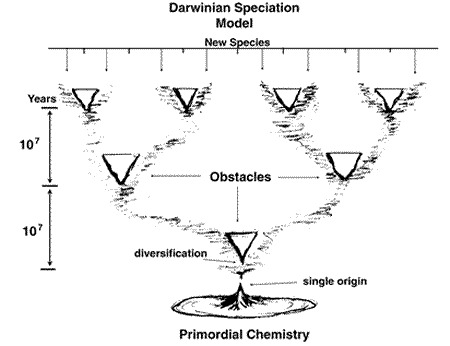 Figure 1. This figure illustrates the Darwinian model of speciation which starts from the single origin producing one clone that is separated by an obstacle into two groups which subsequently accumulate random mutations so that they become sufficiently different from each other that they could no longer interbreed if they were brought together again.