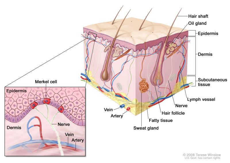 Merkel Cell Carcinoma Treatment (PDQ®) - PDQ Cancer Information