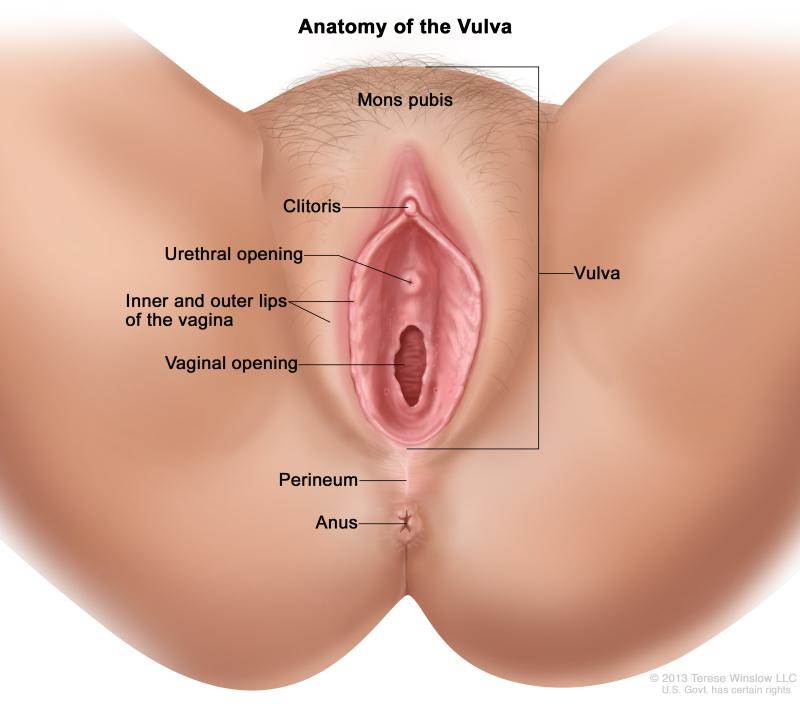 Clit On Vagina