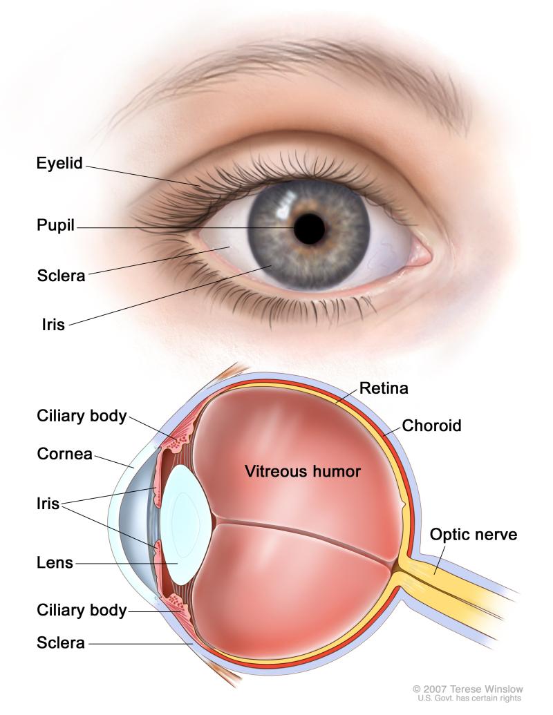 Figure Anatomy Of The Eye Pdq Cancer Information Summaries