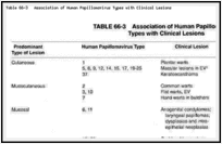 Table 66-3. Association of Human Papillomavirus Types with Clinical Lesions.