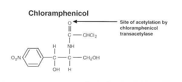 Figure 11-13. Structure of chloranphenicol.