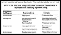 Cell Wall Composition and Taxonomic Classification of Representative Medically Important Fungi.