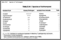 Table 34-1. Species of Actinomyces.