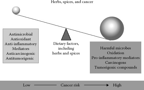 FIGURE 17.2. Multiple factors may influence the need for spices for reducing the risk of cancer or changing the biological behavior of cancerous cells.