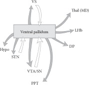 FIGURE 11.2. Schematic illustrating the connections of the ventral pallidum.