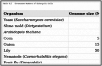 Table 4.2. Chromosome Numbers of Eukaryotic Cells.