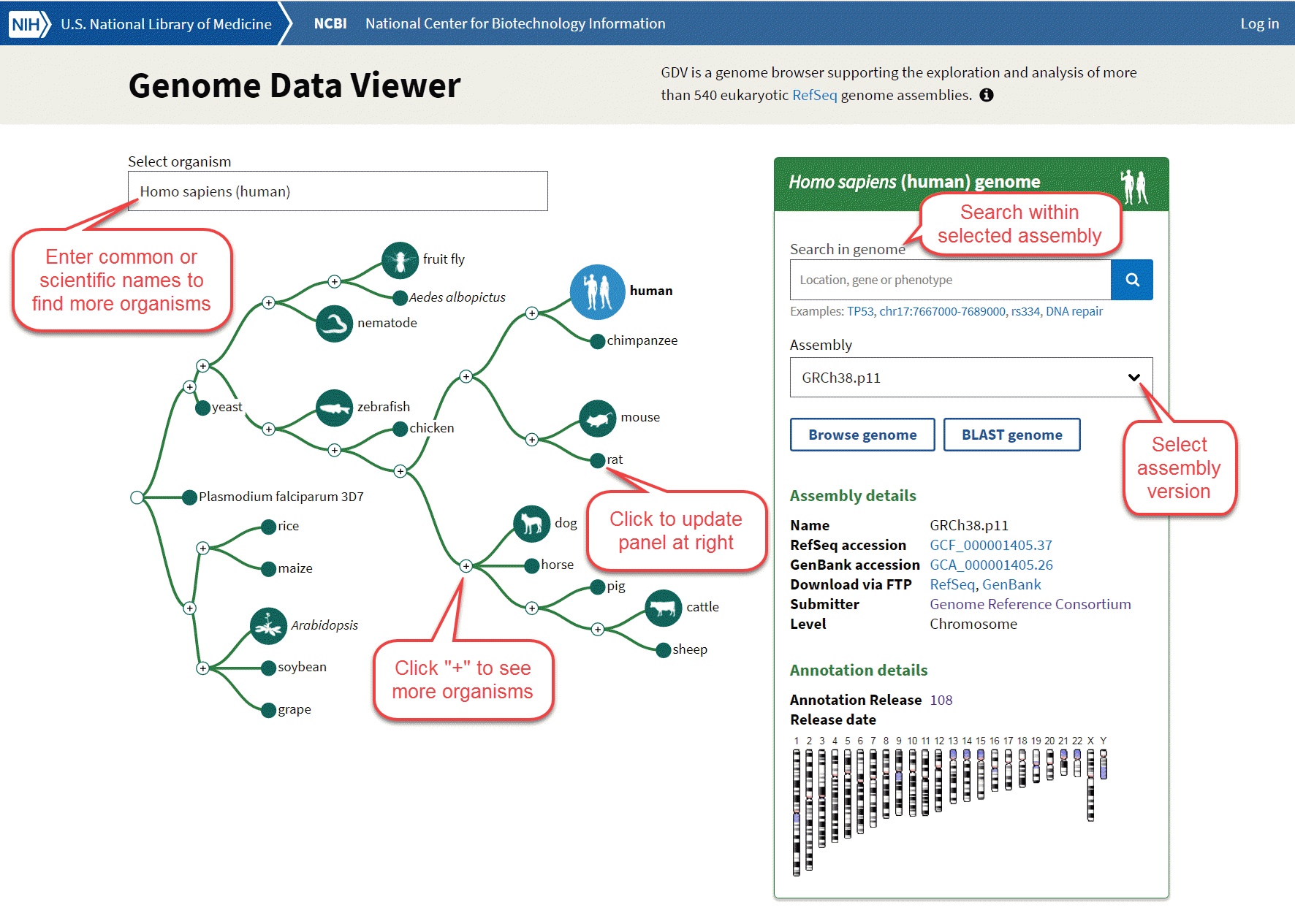 NCBI Genome Data Viewer
