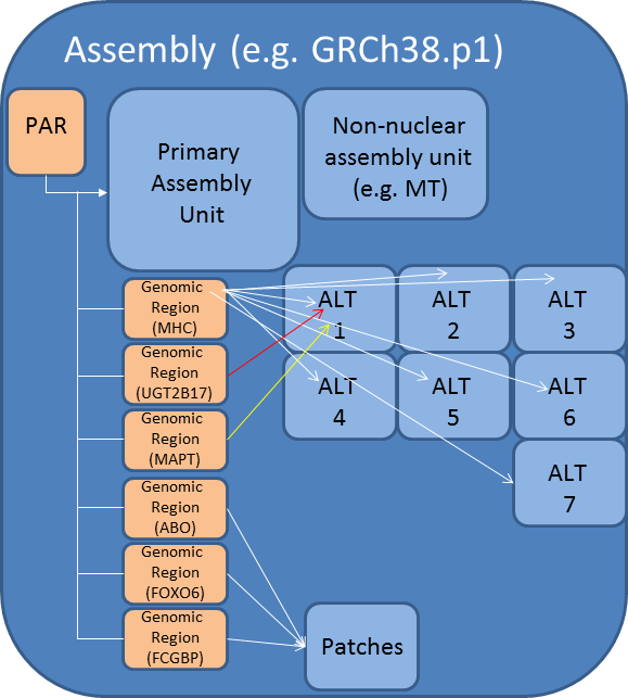 GRCh38p1 assembly model diagram