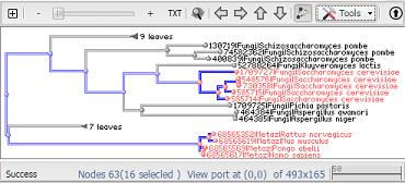NCBI Tree Viewer