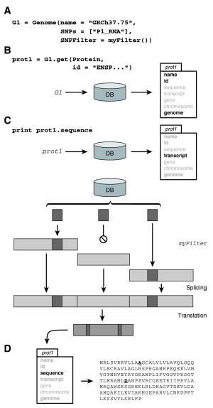 pygeno in personalized medicine