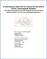 Cover of A Stereotaxic Atlas Of The Brain Of The Zebra Finch, Taeniopygia Guttata