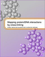 Cover of Mapping Protein/DNA Interactions by Cross-Linking
