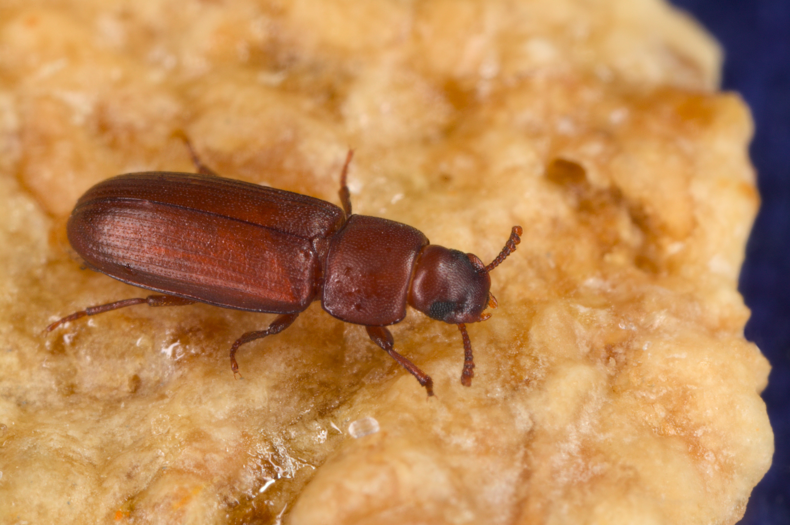 Small Crawling Bugs In Kitchen Kitchen Pests Off Topic Brewerfannet