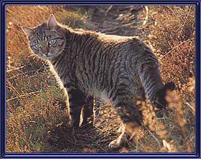 [Image: cat.jpg]