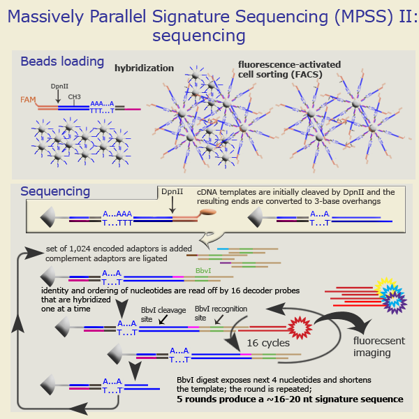 MPSS technology: sequencing