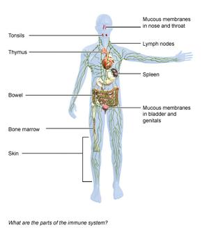 Immune System - National Library of Medicine - PubMed Health