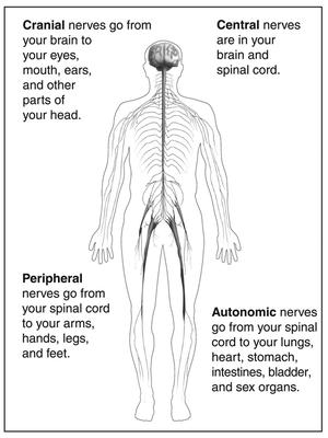 Central Nervous System National Library Of Medicine Pubmed Health
