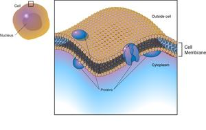 The cell membrane, also called the plasma membrane, is a cell's protective barrier.