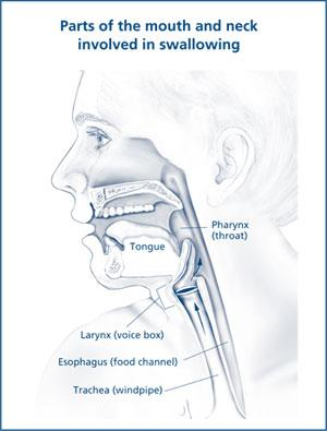 Illustration showing the parts of the mouth and neck involved in swallowing.