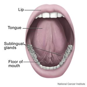 Tongue - National Library of Medicine - PubMed Health