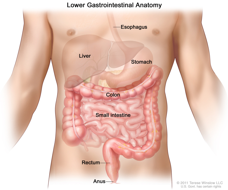 Gastrointestinal Tract - National Library of Medicine - PubMed Health